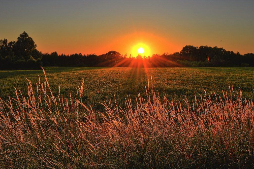Image of Sunrise over field